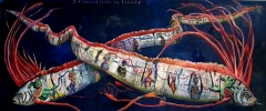 2 Riemenfische in love